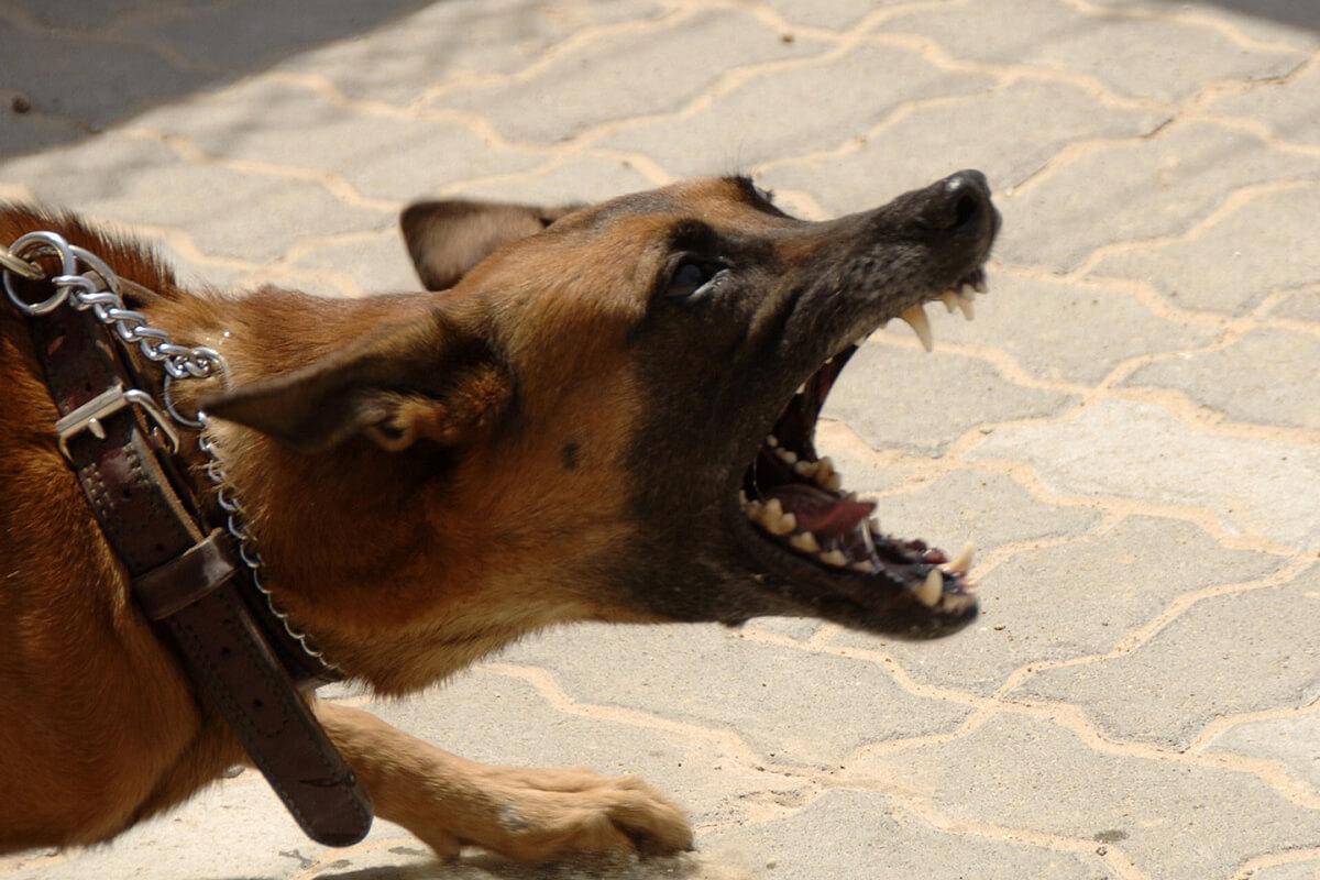 Dog Bite Lawyer Toronto - Ullaw ca